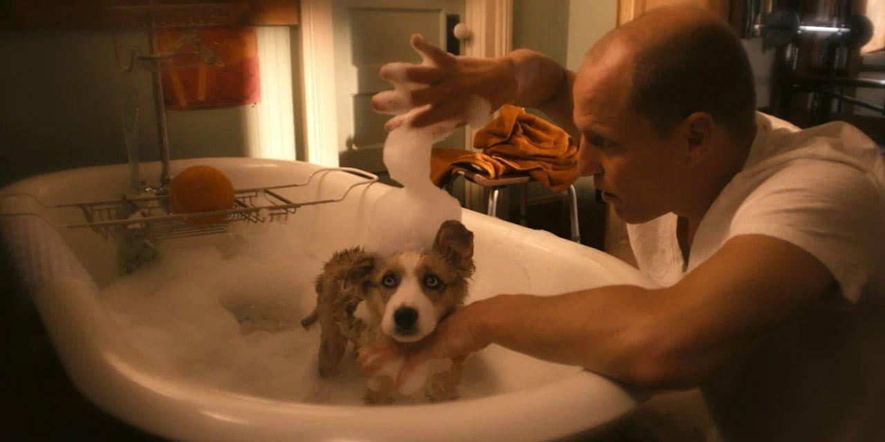 Tallahassee'nin köpeği